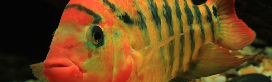 Ocean Nutrition is a manufacturer of premium fish food for